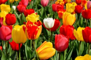 Basic Garden Variety Stretches for Spring Clean-Up