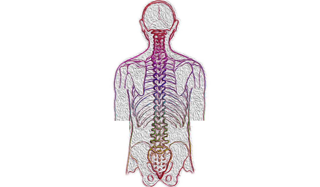 How Chiropractic Treatments Can Reverse Scoliosis