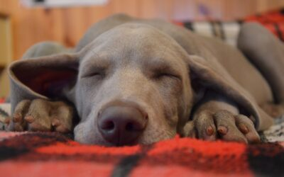 Dreaming About Quality Sleep… Get It!